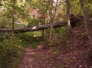 (images:30099508@N00/flickr) Big Ridge State Park
