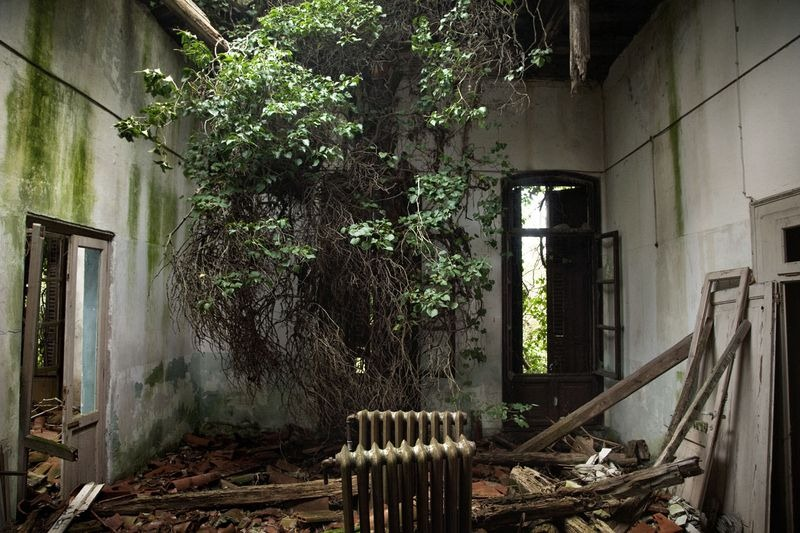 A room at the Poveglia Island already invaded by a tree