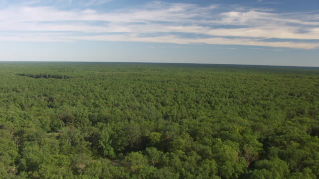 An aerial shot of Pine Barrens