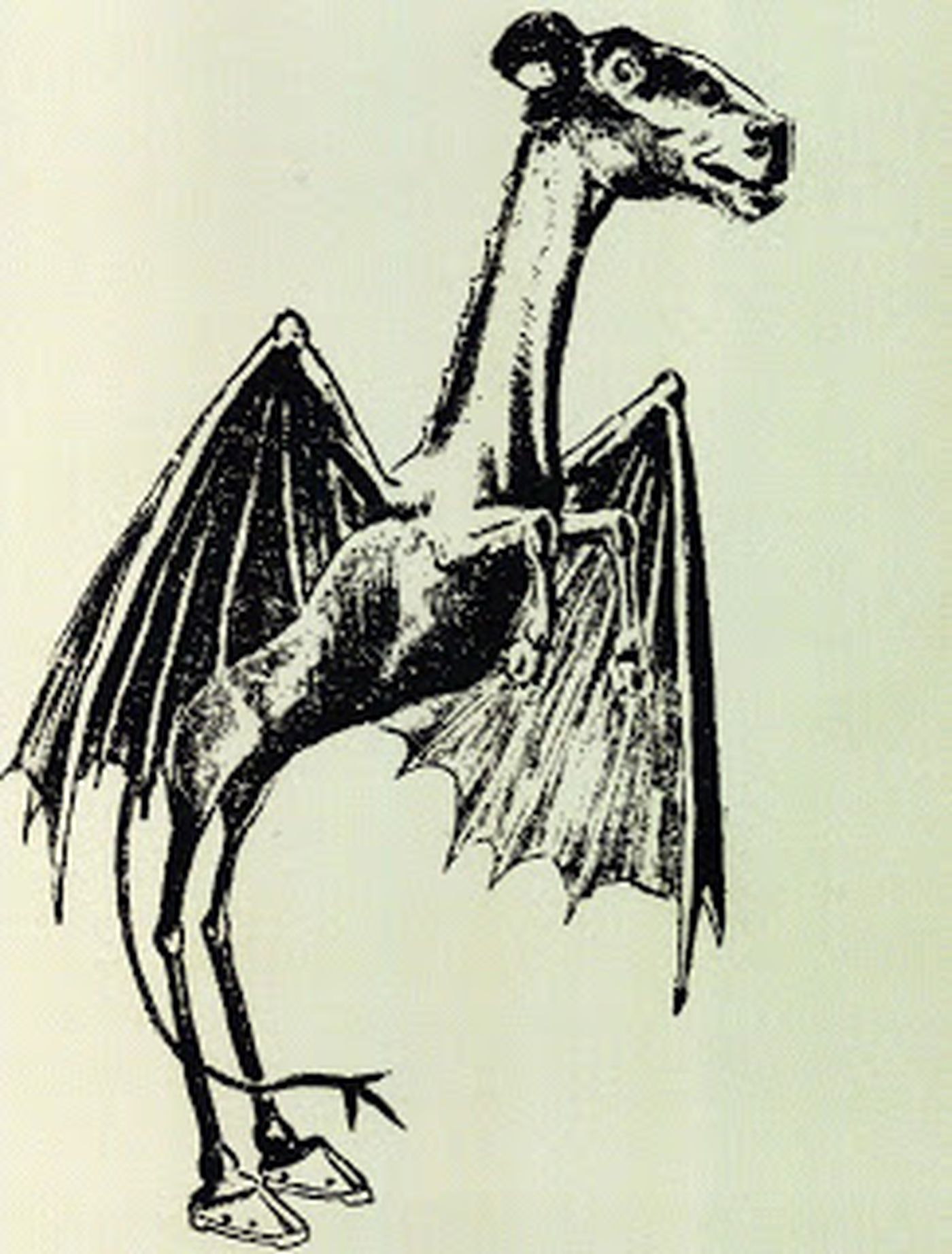 How the Jersey Devil allegedly looks like