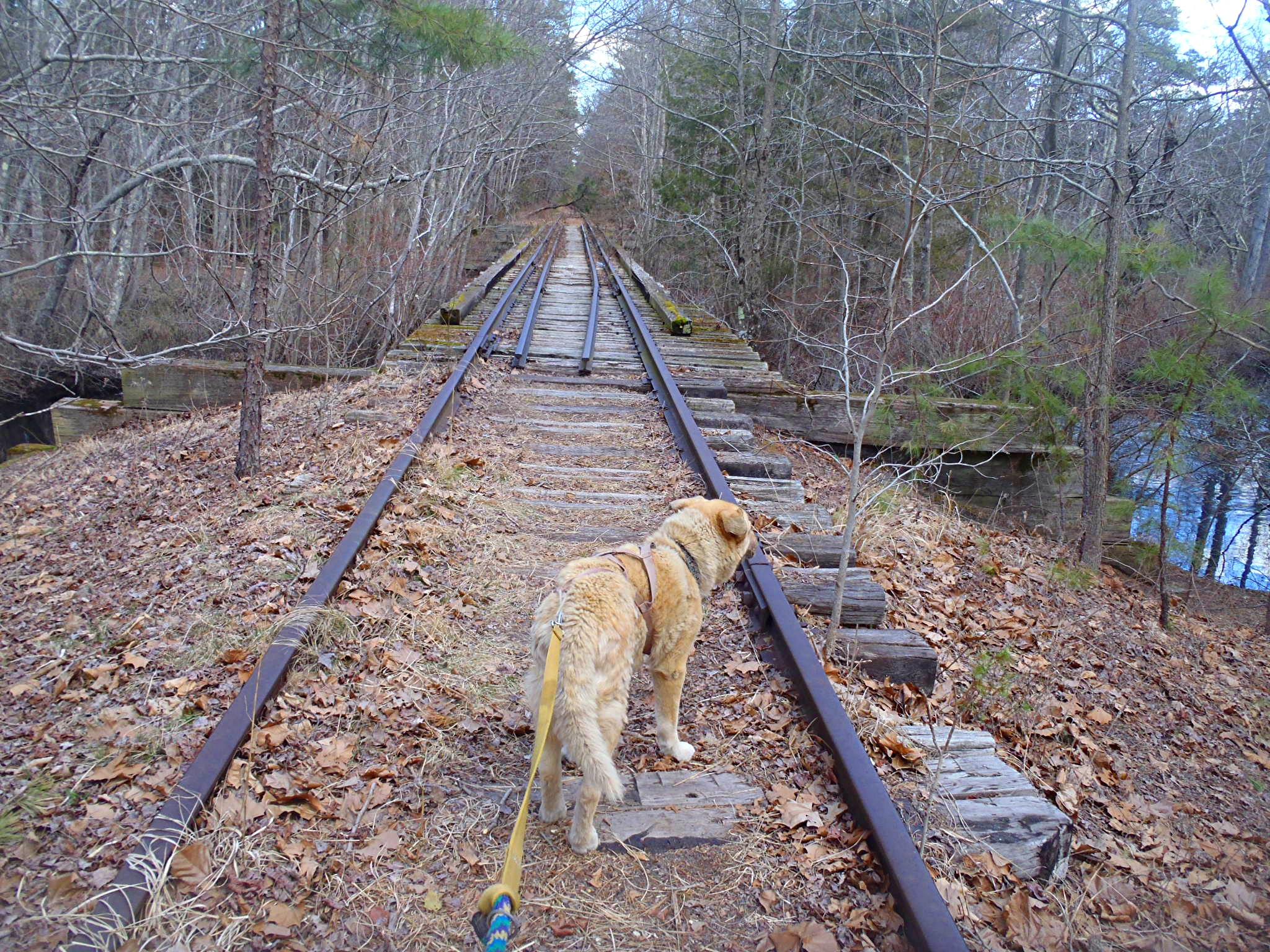 The railroad tracks in Pine Barrens