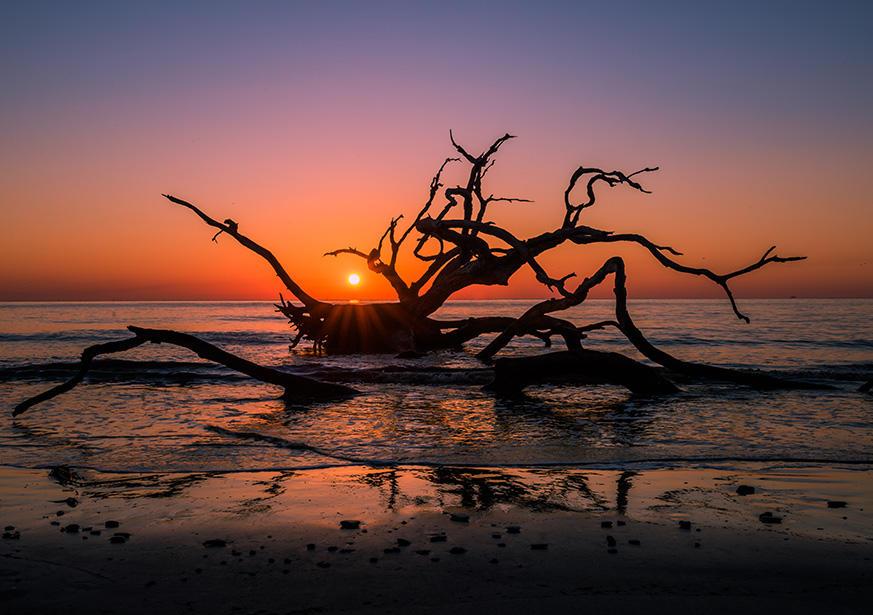 Driftwood beach in Glynn County, Georgia